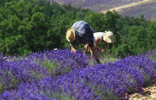 Sous le ciel de Provence - Les Evènements